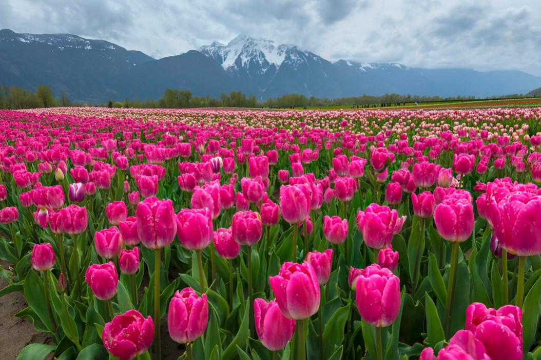 идёт, красивые горные пейзажи весна с тюльпанами фото использовать такие шторы