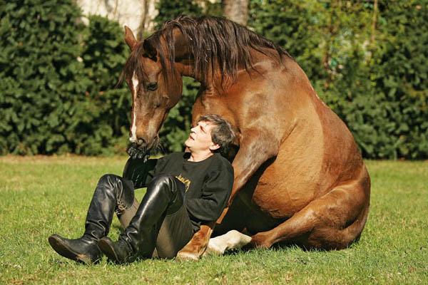 pony excel фото