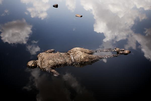 15 лучших работ World Press Photo 2013: подборка Сергея Максимишина