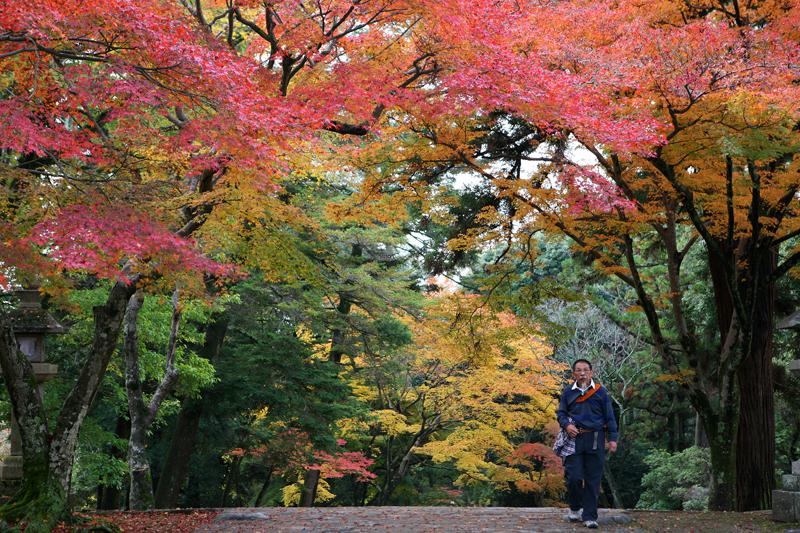 Клены в парке Нары