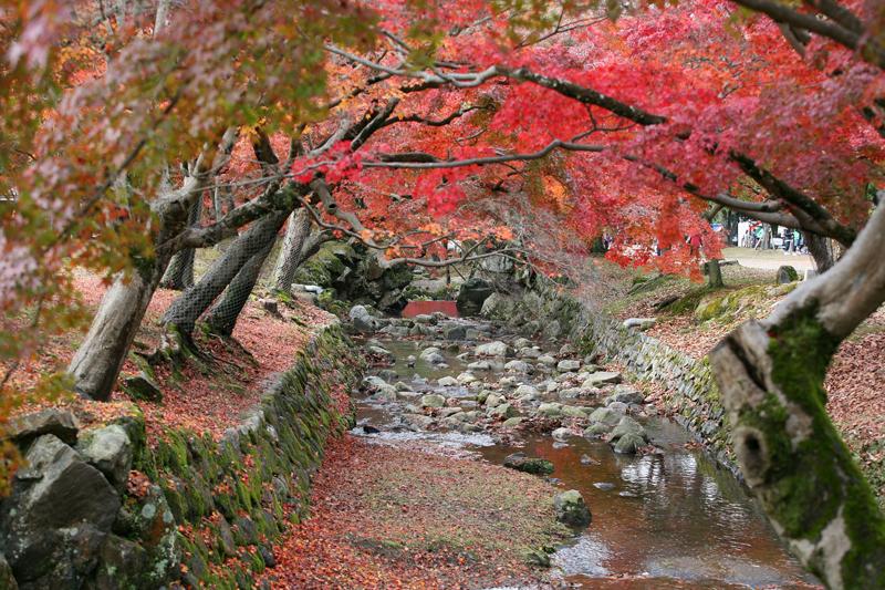 Ручей в парке Нары