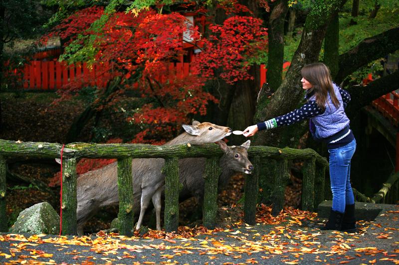 Кормешка оленя в парке