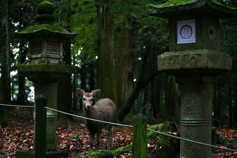 Фонарики в парке Нары