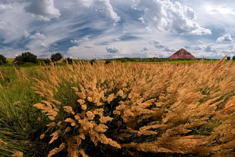 Там, где травы по-пояс