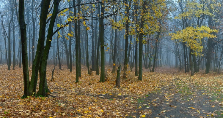 Проходит осень