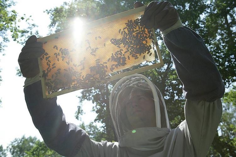 Рамка с медом