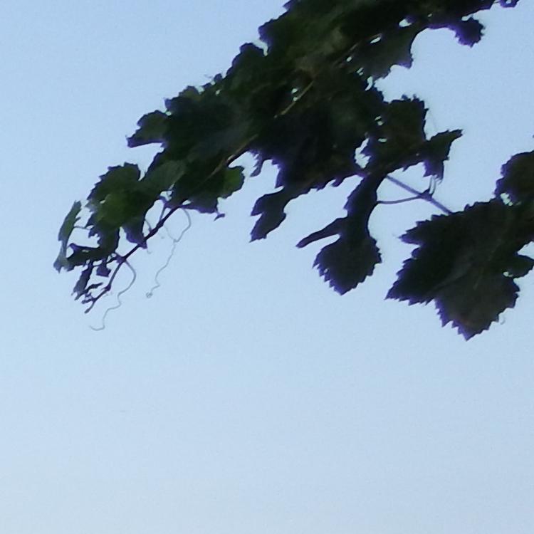 Листья. Снято на Fujifilm FinePix XP200