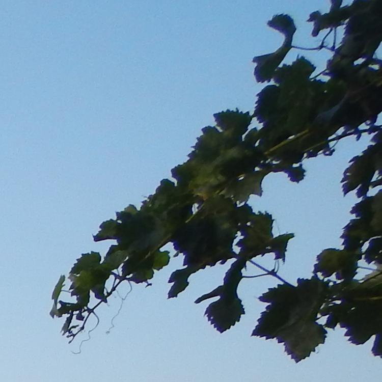 Листья. Снято на Nikon Coolpix AW110