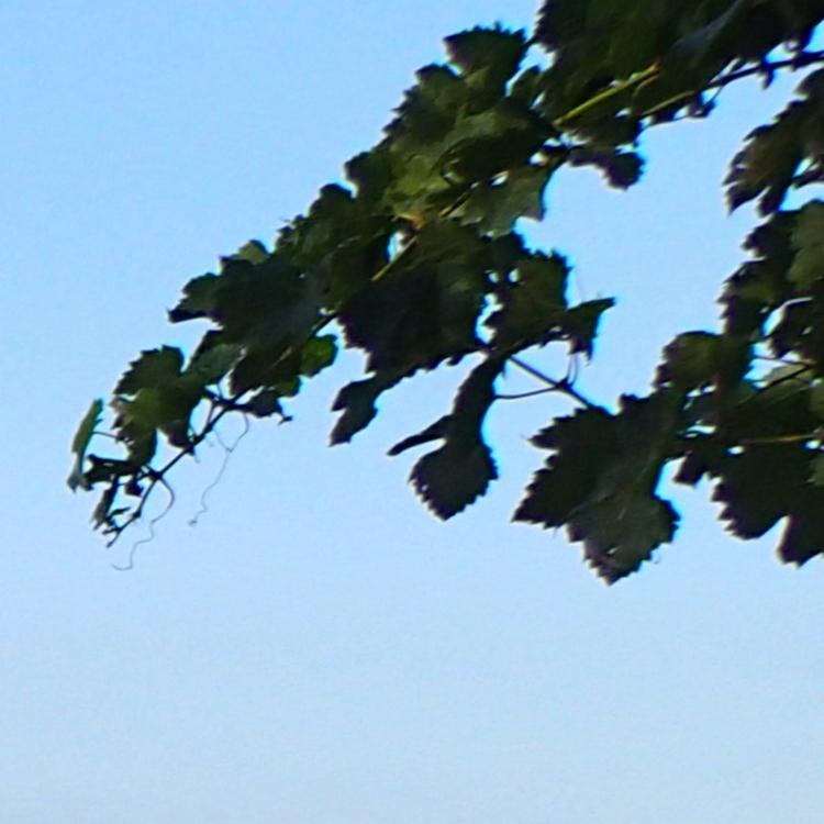 Листья. Снято на Olympus Tough TG-2