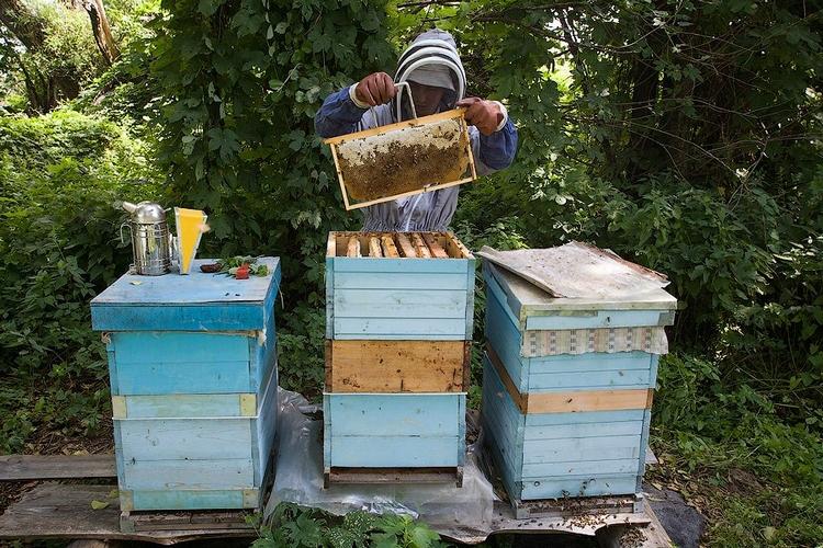 Достаем рамки с мёдом