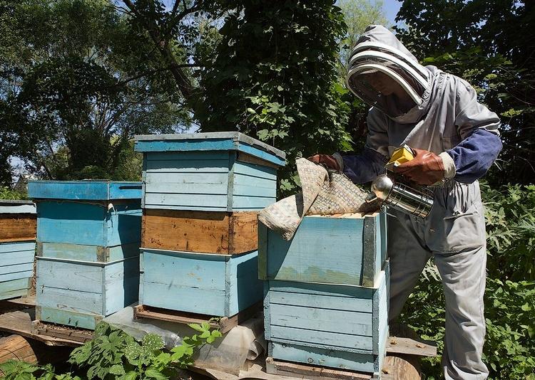 Обкуривание пчел дымом
