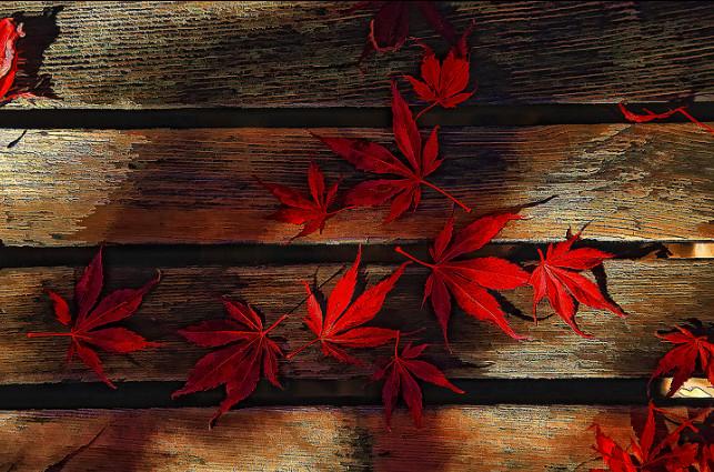 Листья клена на скамейке. Фото: Bruce Tighe