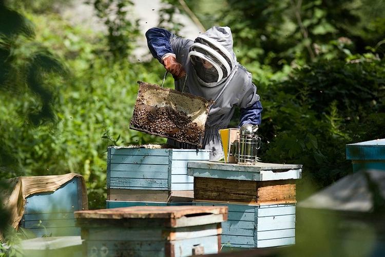 Рамки с мёдом