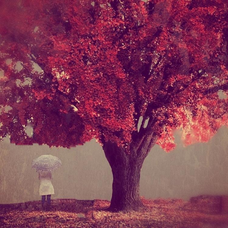 Осенний дождь. Фото Мелиссы Винсент