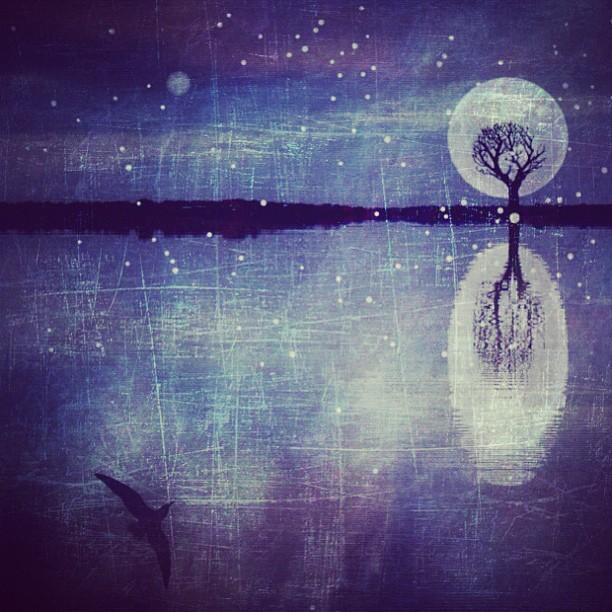 Ночь.  Фото Мелиссы Винсент