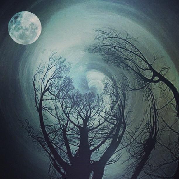 Деревья и луна. Фото Мелиссы Винсент