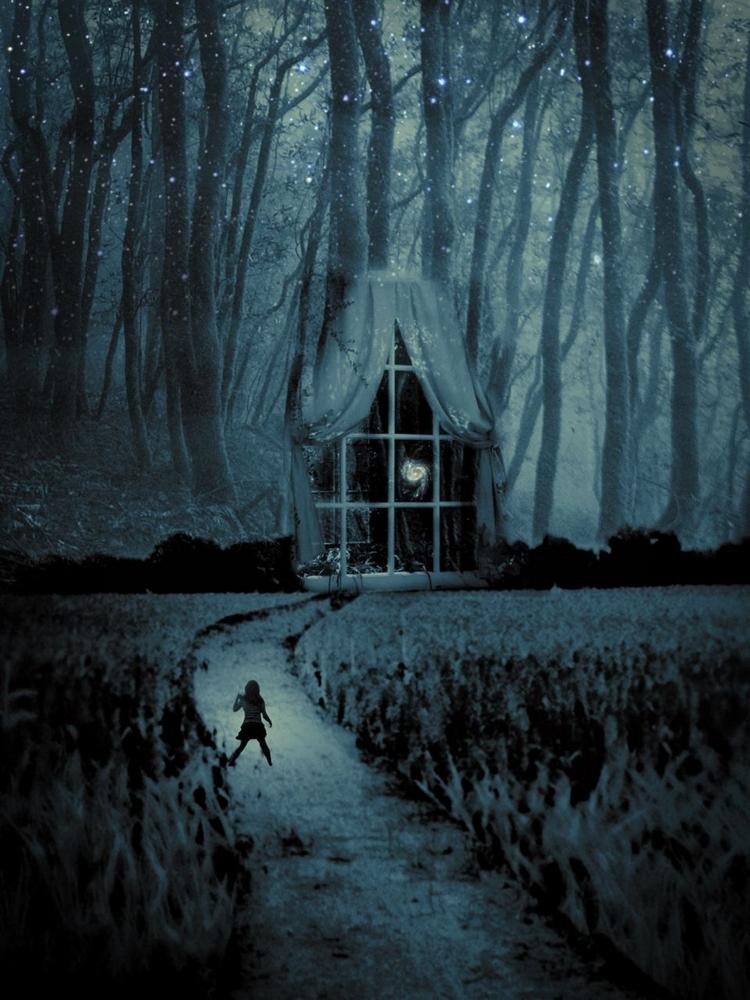 Магия ночного леса. Фото Мелиссы Винсент