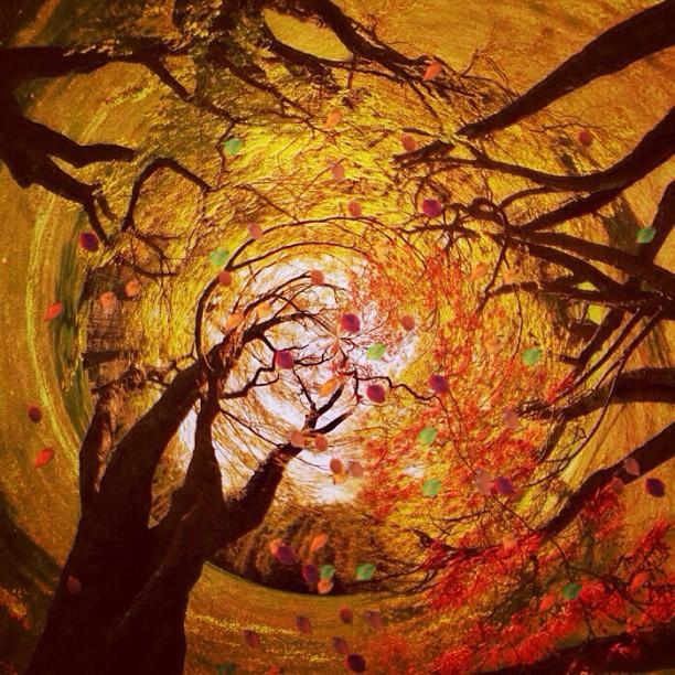 Волшебная осень. Фото Мелиссы Винсент