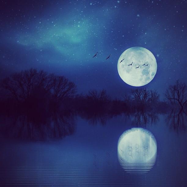 Ночной пейзаж. Фото Мелиссы Винсент