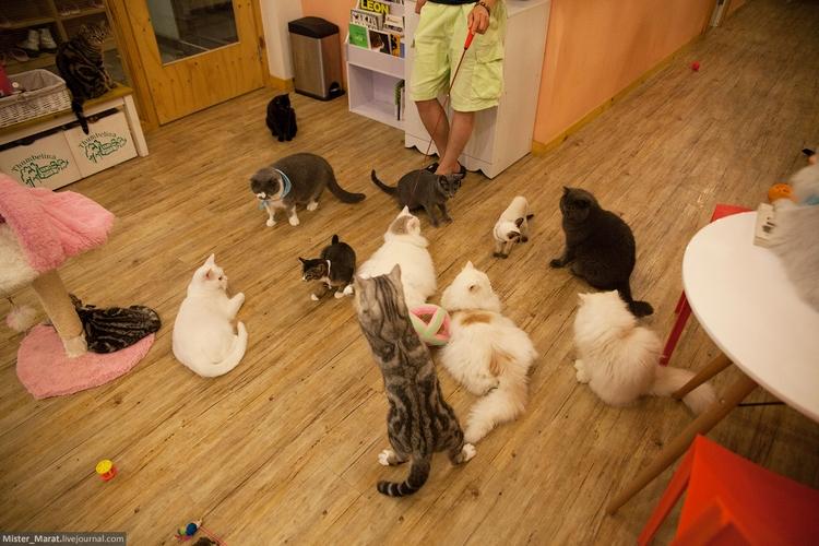 Кошки гуляют по кафе