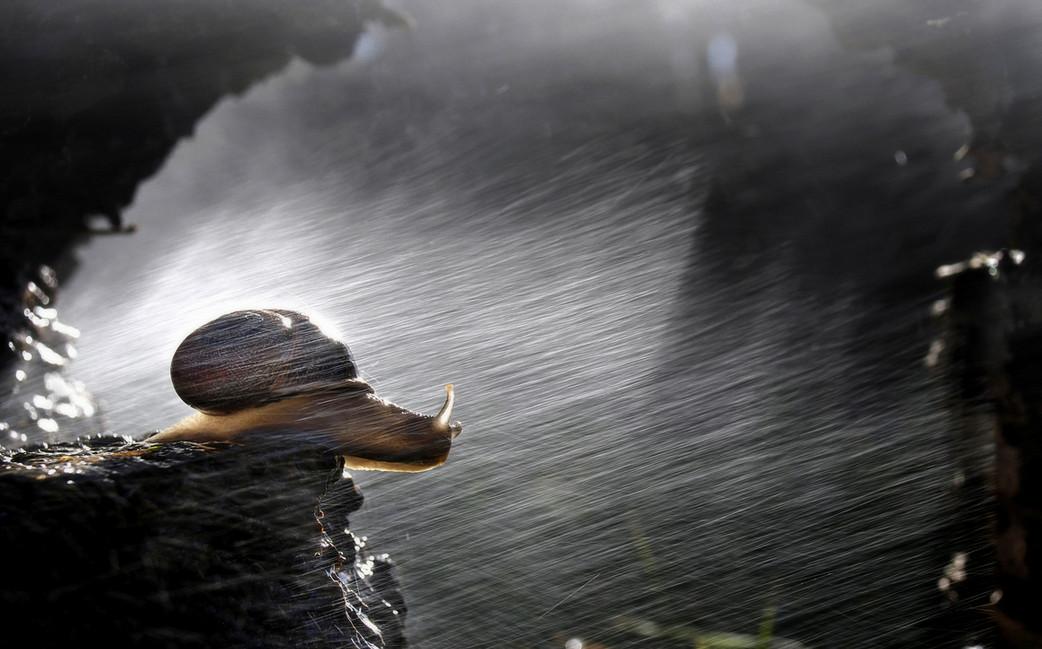 Улитка под дождем. Фото: Mario Boh