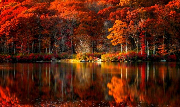 42 Autumn Backgrounds Download Free Stunning Hd: Пейзажи золотой осени: 20 ярких фотографий