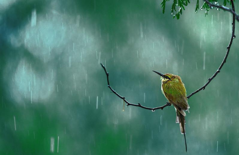 Природа во время дождя. Фото: Atif Saeed