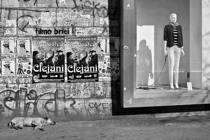 Собака возле витрины. Фото: Cristian Munteanu