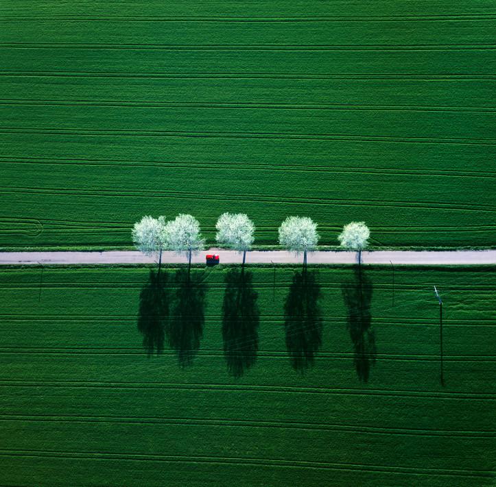 Зеленые поля. Фото: Klaus Leidorf