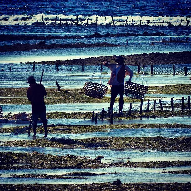 Сбор рыбы при отливе