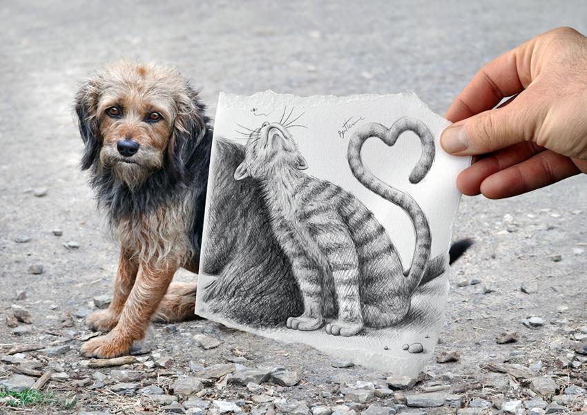 Кошка и собака. Фото: Бен Хайне