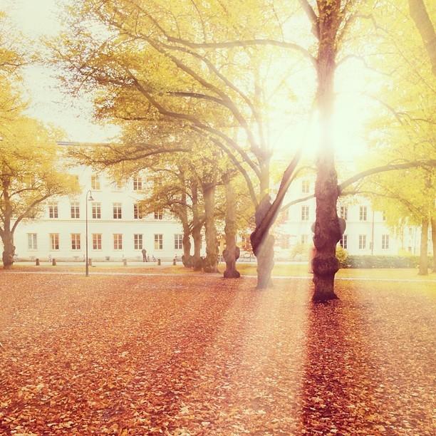 Солнечная осень. Инстаграм-фотография Хулиана Кастанеды