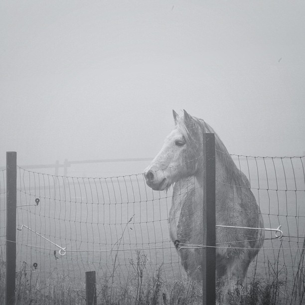 Лошадь в тумане. Фото: Франк, Германия