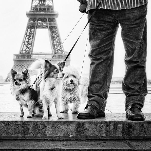Собачки и Эйфелева башня. Фото: Мустафа Сэвэн