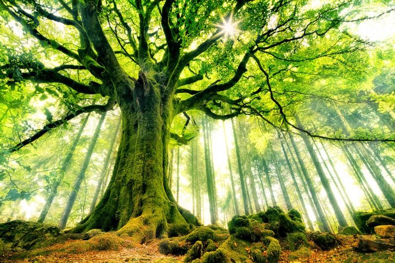 Лес. Фото: CHRISTOPHE KICIAK