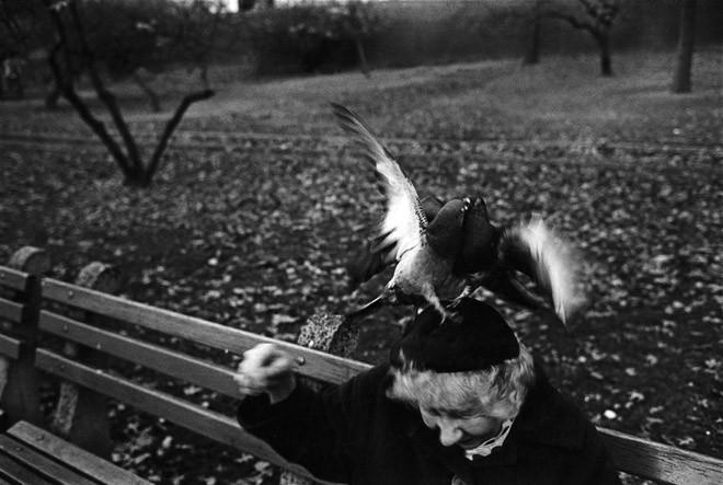 Женщина и голубь. Фото: Ричард Калвар