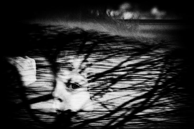 «Оставшийся в живых» (Little Survivor), Nemanja Pančić. Фотография, победившая в конкурсе World Press Photo – 2013