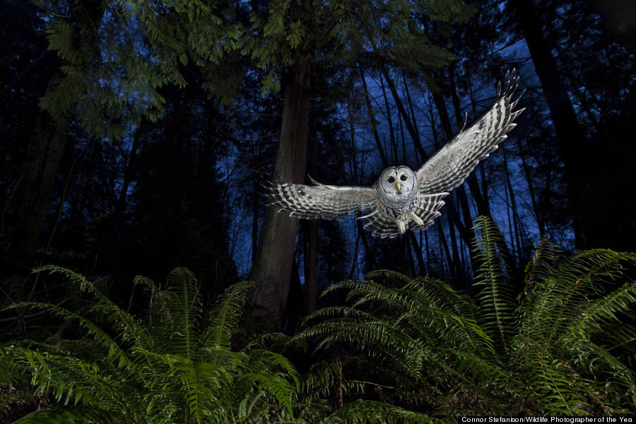 The flight path © Connor Stefanison / Wildlife Photographer of the Year 2013