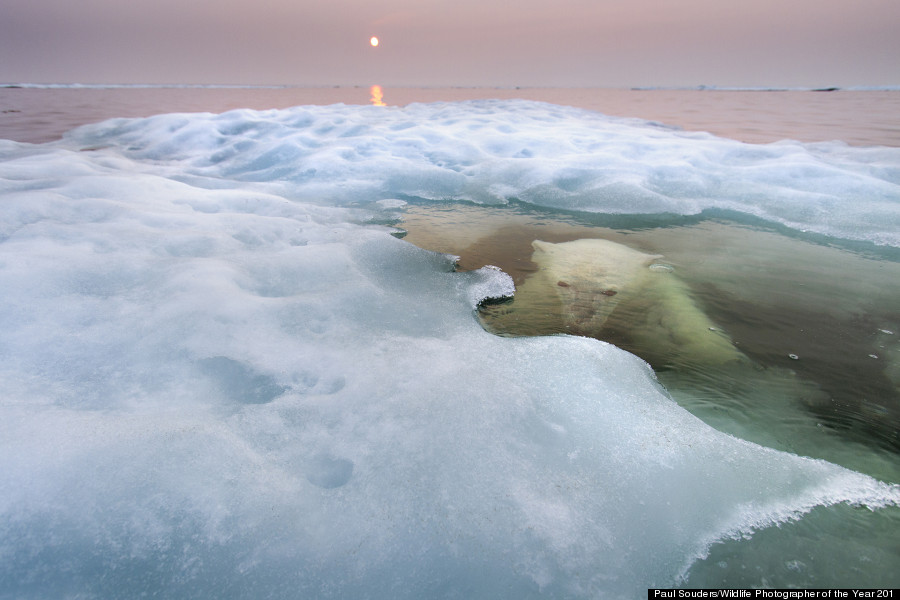 Water Bear © Paul Souders / Wildlife Photographer of the Year 2013