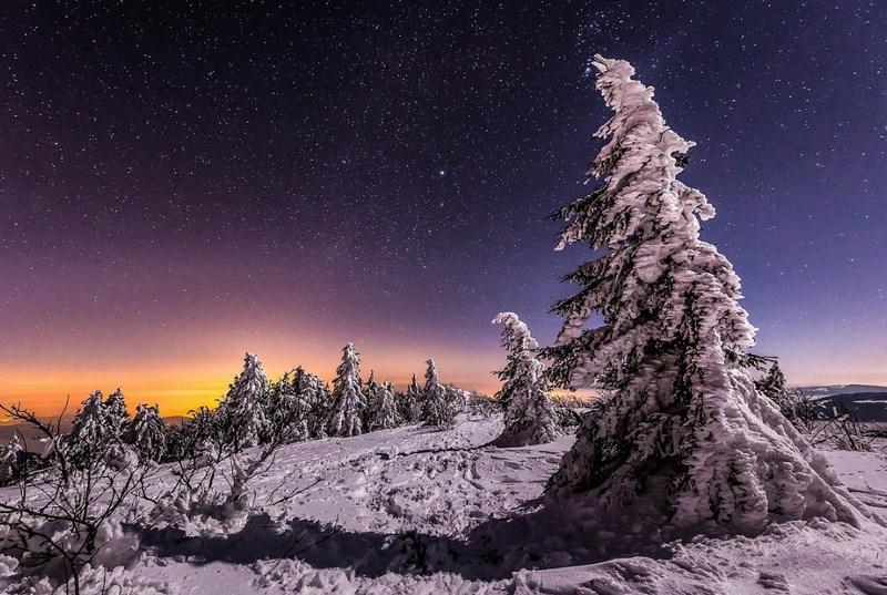 Зимняя ночь, лес. Фото:  Joris Kiredjian