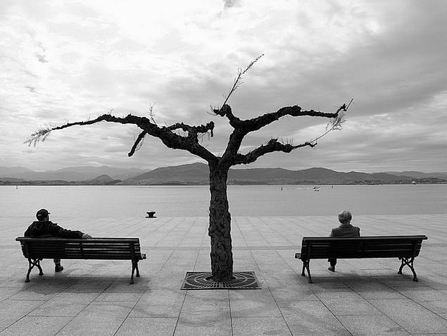 Дерево и горожане. Фото: Ester