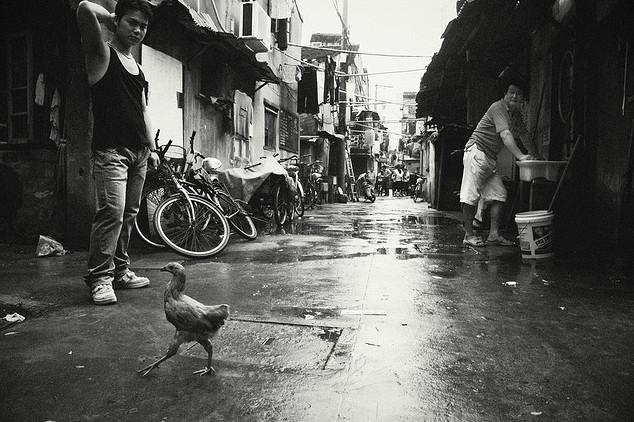 Цыпленок на улице. Фото: Sakura Love