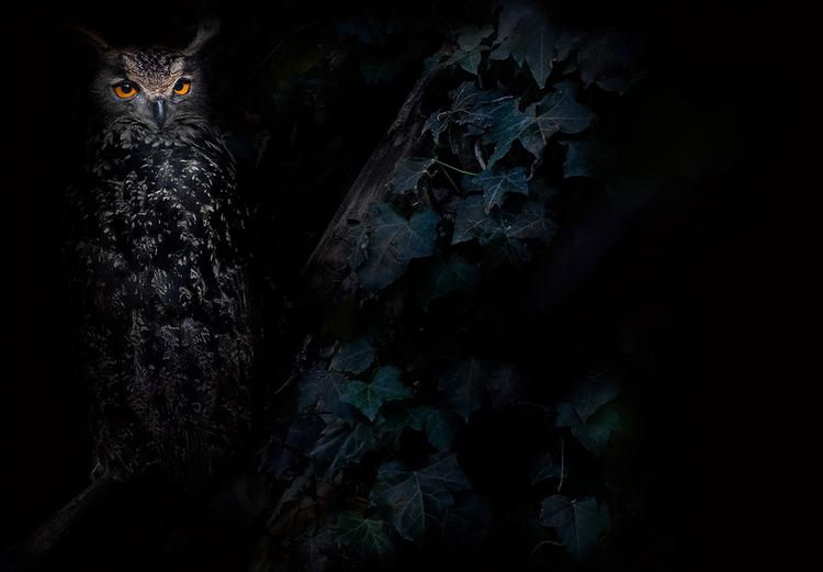 Сова в лесу. Фото: Max Rinaldi