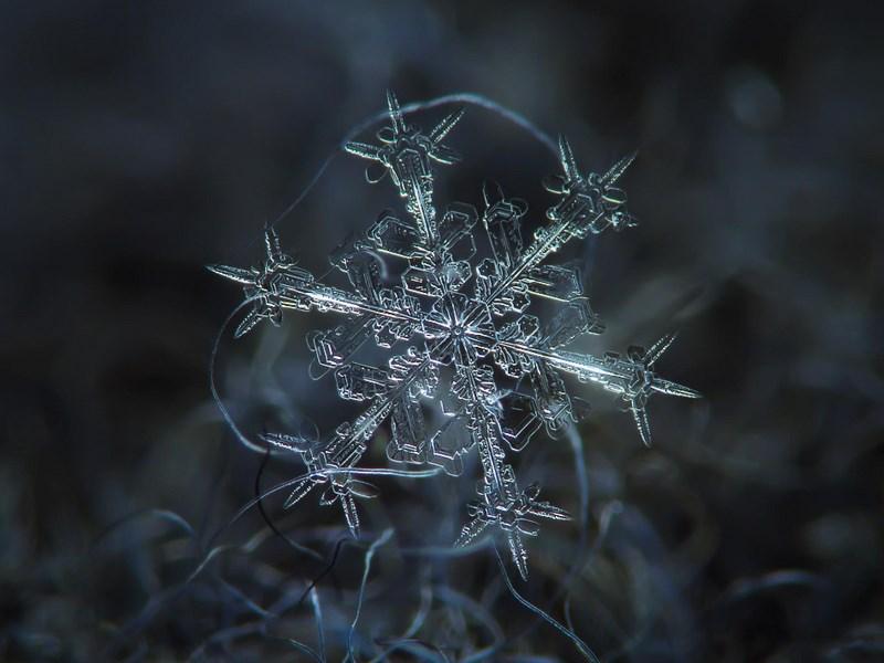 Снежинка. Фото: Алексей Клятов