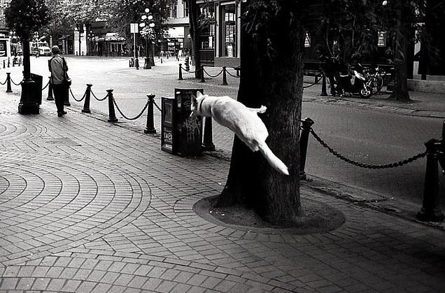 Собака на дереве. Фото Peter Pawlowski