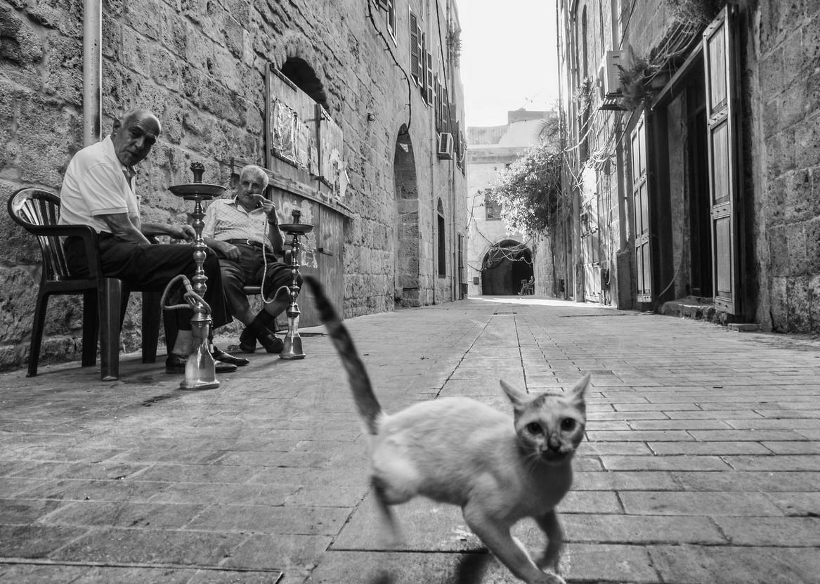 Кошка на улице города. Фото George Pauwels