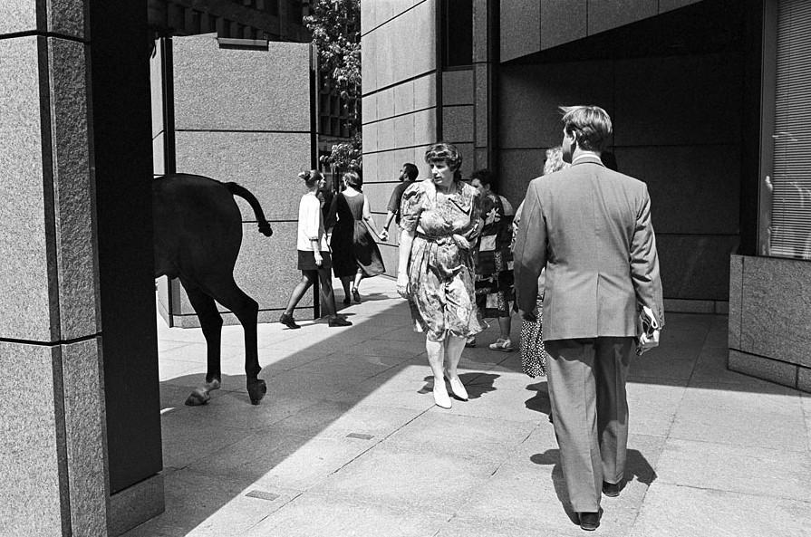 Конь и прохожие. Фото David Solomons