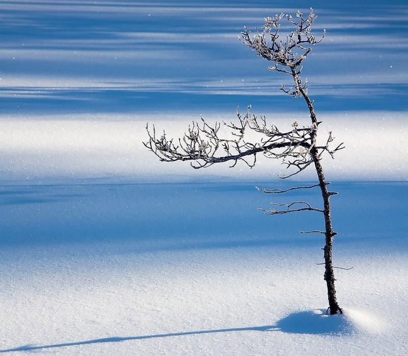 Синий снег. Фото:  Robert Gotthold