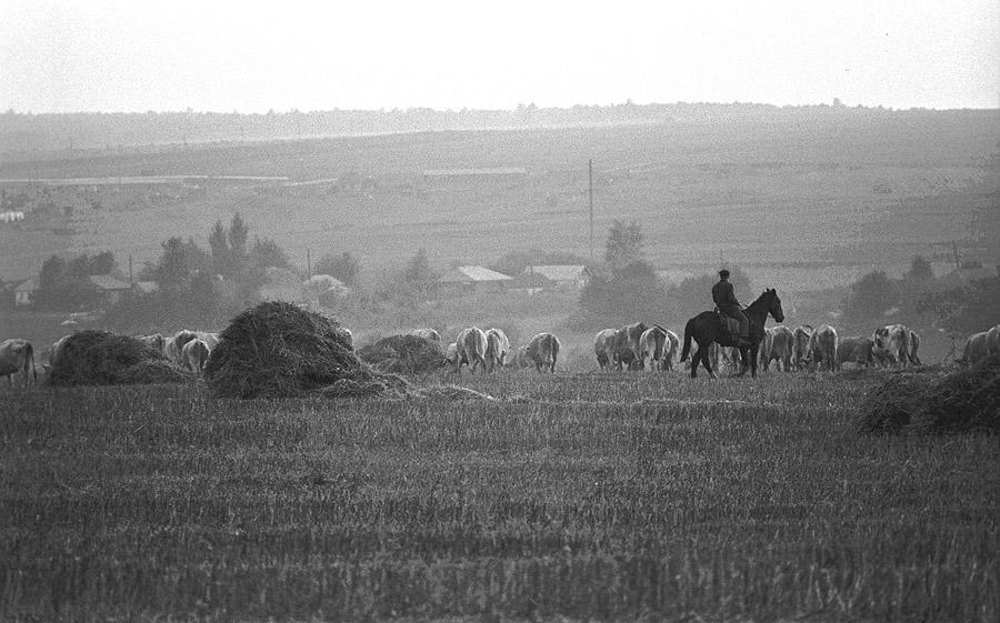 «Деревенское утро», Вологодская область, 1978 год