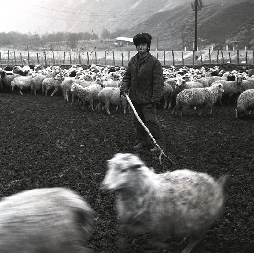 Баранолюб и барановед. Гунделен, 1976